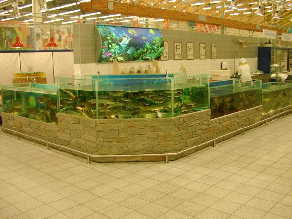 Система торговых аквариумов. Аквариумы для продажи морских животных и раков. Аквариум для передержки морских животных в ресторане. Торговый аквариум. Аквариум торговый. Торговые аквариумы для продажи живой рыбы. Аквариумы торговые для живой рыбы. Продажа живой рыбы в ресторанах из аквариумов. Торговый аквариум для морепродуктов. Аквариумы торговые для продажи морепродуктов.