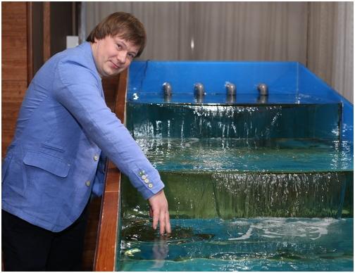 Аквариум для содержания морепродуктов в ресторанах. Аквариум для устриц Аквариумы для морепродуктов.