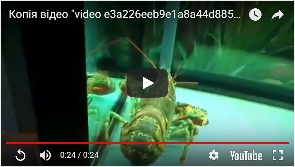 Видео морского аквариума для устриц и других морепродуктов