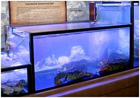 Оборудование для промышленных аквариумов