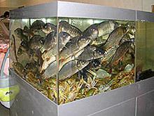 Торговый аквариум. Аквариумы для продажи морских животных и раков. Аквариум для передержки морских животных в ресторане. Торговый аквариум. Аквариум торговый. Торговые аквариумы для продажи живой рыбы. Аквариумы торговые для живой рыбы. Продажа живой рыбы в ресторанах из аквариумов. Торговый аквариум для морепродуктов. Аквариумы торговые для продажи морепродуктов.