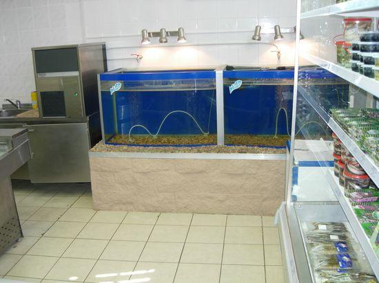 Торговый аквариум с верхним неспециализированным освещением. Аквариумы для продажи морских животных и раков. Аквариум для передержки морских животных в ресторане. Торговый аквариум. Аквариум торговый. Торговые аквариумы для продажи живой рыбы. Аквариумы торговые для живой рыбы. Продажа живой рыбы в ресторанах из аквариумов. Торговый аквариум для морепродуктов. Аквариумы торговые для продажи морепродуктов.