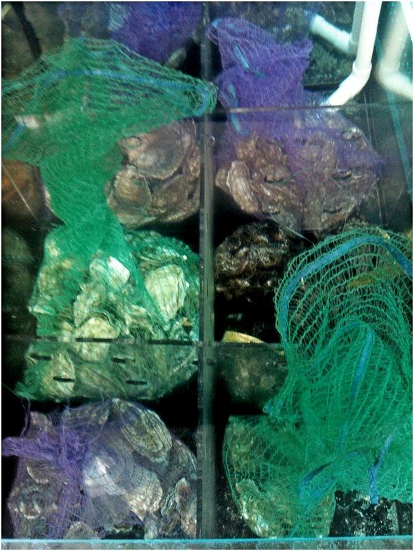 Торговый аквариум из стеклопакета в ресторане.Живые морепродукты из аквариума. Аквариумы для устриц, омаров, лангустов, крабов, моллюсков, раков. Изготовление аквариумов для содержания моллюсков на заказ. Аквариумы для торговли морепродуктами. Аквариум для продажи морепродуктов.