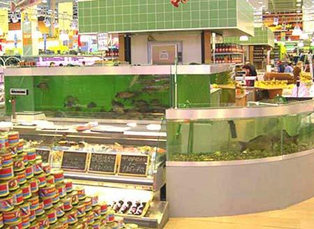 Аквариум для торговли живой рыбой в супермаркете. Аквариумы для продажи морских животных и раков. Аквариум для передержки морских животных в ресторане. Торговый аквариум. Аквариум торговый. Торговые аквариумы для продажи живой рыбы. Аквариумы торговые для живой рыбы. Продажа живой рыбы в ресторанах из аквариумов. Торговый аквариум для морепродуктов. Аквариумы торговые для продажи морепродуктов.