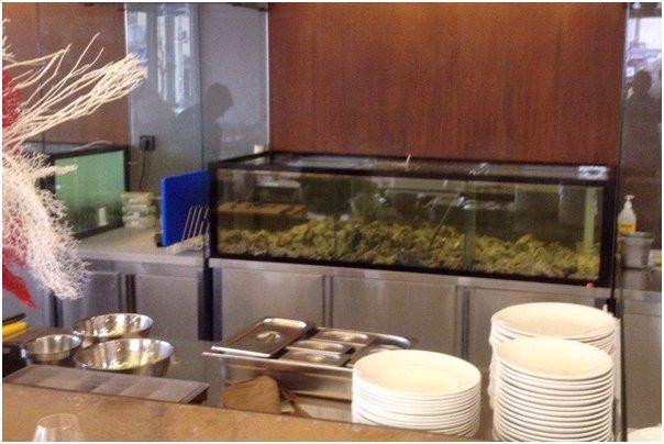 Аквариум для устриц Аквариумы для морепродуктов.. Торговые аквариумы для продажи моллюсков. Аквариумы для торговли морепродуктами.
