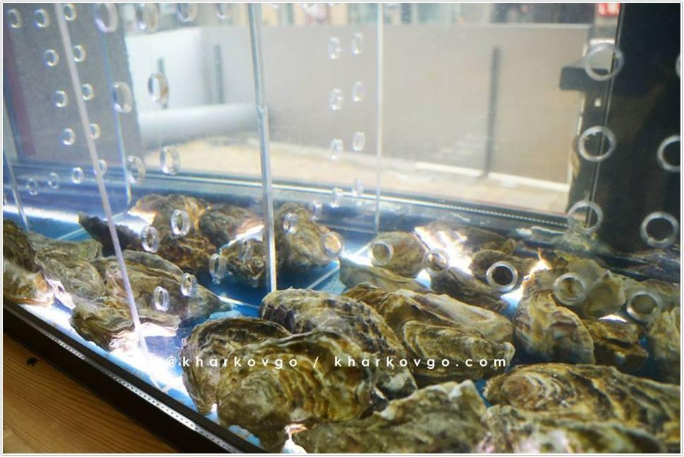 """Торговый аквариум для продажи устриц в кафе """"Don Mare"""""""
