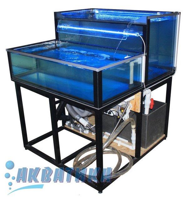 Торговый морской аквариум. Морские аквариумы для торговли моллюсками, омарами, мидиями. Купить аквариум для торговли морскими моллюсками. Аквариум для устриц Аквариумы для морепродуктов.