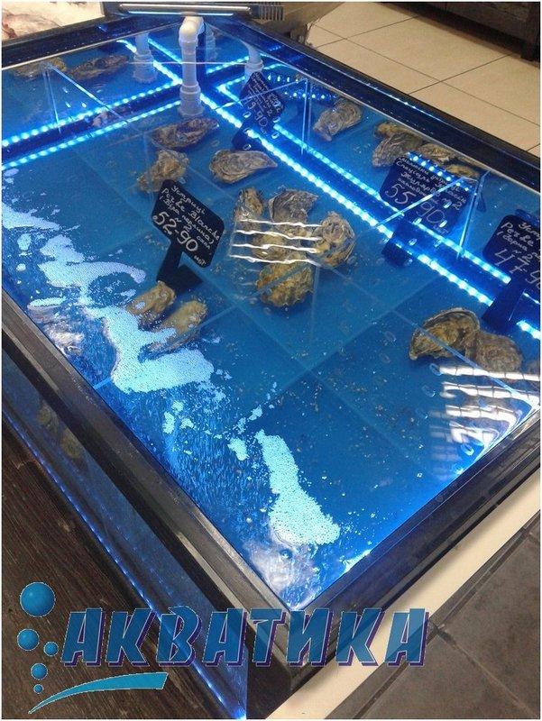 Торговый аквариум, морской аквариум, аквариум для продажи устриц, торговые аквариумы в Украине, Харькове, Киеве, Одессы, Николаеве, Полтаве