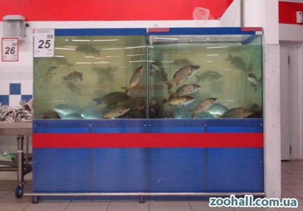 Торговый аквариум с нижним освещением. Аквариумы для продажи морских животных и раков. Аквариум для передержки морских животных в ресторане. Торговый аквариум. Аквариум торговый. Торговые аквариумы для продажи живой рыбы. Аквариумы торговые для живой рыбы. Продажа живой рыбы в ресторанах из аквариумов. Торговый аквариум для морепродуктов. Аквариумы торговые для продажи морепродуктов.