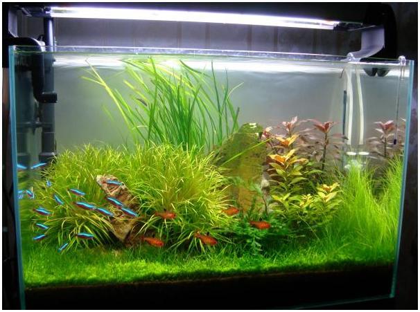 эту тему: как сделать воду в аквариуме прозрачной чтобы белье сидело