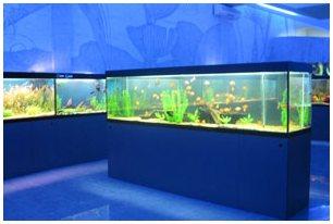 Пресноводные аквариумы в харьковском дельфинарии. Пресноводные аквариумы в Харькове. Пресноводный аквариум на заказ.
