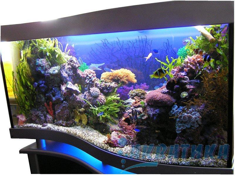 Аквариум с гнутым стеклом в виде волны. Морской аквариум с гнутым стеклом.  Изготовление аквариумов с гнутыми стеклами  под заказ. Изготовление индивидуальных аквариумов под заказ. Аквариумная крышка. Крышки для аквариумов. Аквариумный светильник. Светильники аквариумные. Подставки для аквариумов. Тумбы аквариумные. Купить аквариум в Украине. Купить аквариум в Харькове. Заказать аквариум. Купить аквариумы. Заказать аквариумы. Заказ аквариумов в Харькове. Покупка аквариума. Продажа аквариума.
