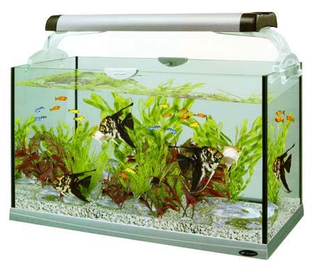 Аквариум без аквариумной крышки. Крышки для аквариума. Аквариумная крышка. Изготовить аквариумную крышку.