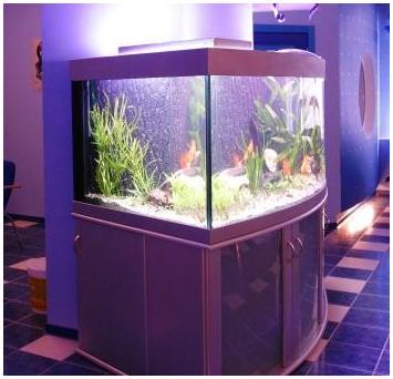 Аквариумная подставка. Аквариумная тумба. Подставка для аквариума. Тумба для аквариума из ДСП. Изготовление подставки для аквариума из ДСП. Изготовление тумбы для аквариума из ДСП. Заказать подставку для аквариума из ДСП. Заказать тумбу аквариумную из ДСП. Подставка под аквариум. Тумба под аквариум. Подставка аквариумная. Тумба аквариумная. Подставки под аквариумы. Тумбы под аквариумы. Подставки аквариумные. Тумбы аквариумные. Аквариумные тумбы. Аквариумные подставки. Фасады подставки из крашеного МДФ. Аквариумная подставка из МДФ. Аквариумная тумба. Тумбы аквариумные из МДФ. Подставки для аквариума из МДФ. Тумба для аквариума из МДФ. Заказать подставку, тумбу из МДФ