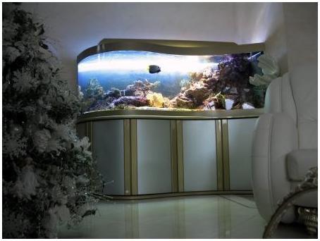 Аквариумная подставка. Аквариумная тумба. Подставка для аквариума. Тумба для аквариума из ДСП. Изготовление подставки для аквариума из ДСП. Изготовление тумбы для аквариума из ДСП. Заказать подставку для аквариума из ДСП. Заказать тумбу аквариумную из ДСП. Подставка под аквариум. Тумба под аквариум. Подставка аквариумная. Тумба аквариумная. Подставки под аквариумы. Тумбы под аквариумы. Подставки аквариумные. Тумбы аквариумные. Аквариумные тумбы. Аквариумные подставки. Основа подставки - металлоконструкция из профиля 60х30 и 40х40. Подставка из металла для аквариума. Металлоконструкция для аквариума. Металлокаркас для аквариума заказать. Подставка из металла для аквариума. Заказать тумбу металлическую аквариумную.