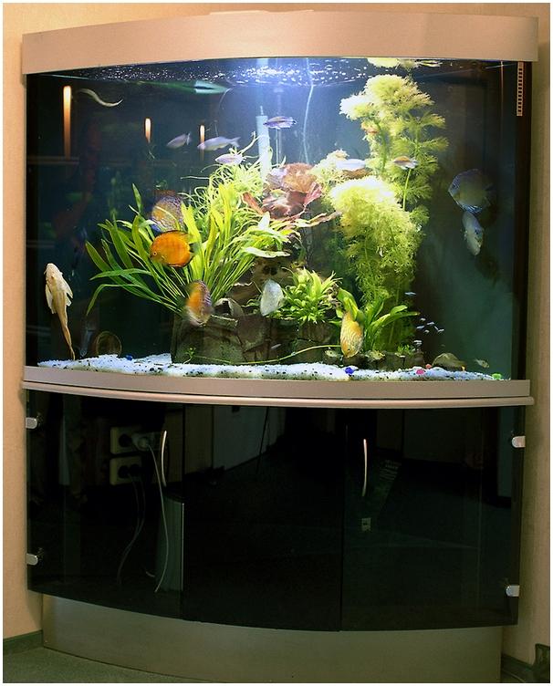 Гнутое стекло в качестве дверей в подставке. Аквариумная подставка из ДСП. Аквариумная тумба из ДСП. Подставка для аквариума из ДСП. Тумба для аквариума из ДСП. Изготовление подставки для аквариума из ДСП. Изготовление тумбы для аквариума из ДСП. Заказать подставку для аквариума из ДСП. Заказать тумбу аквариумную из ДСП