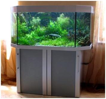 Аквариумная подставка. Аквариумная тумба. Подставка для аквариума. Тумба для аквариума из ДСП. Изготовление подставки для аквариума из ДСП. Изготовление тумбы для аквариума из ДСП. Заказать подставку для аквариума из ДСП. Заказать тумбу аквариумную из ДСП. Подставка под аквариум. Тумба под аквариум. Подставка аквариумная. Тумба аквариумная. Подставки под аквариумы. Тумбы под аквариумы. Подставки аквариумные. Тумбы аквариумные. Аквариумные тумбы. Аквариумные подставки.Подставка из МДФ. Аквариумная подставка из МДФ. Аквариумная тумба. Тумбы аквариумные из МДФ. Подставки для аквариума из МДФ. Тумба для аквариума из МДФ. Заказать подставку, тумбу из МДФ