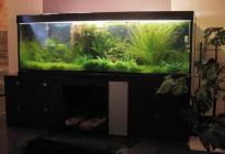 Хозяин аквариума - создатель аквадизайна