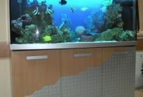 Аквариум с морским биотопом