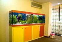 Яркий детский аквариум. Оформление, фото Арчакова И. Идея: Ивониной Е.
