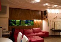 Встроенный аквариум. Оформление, фото Арчакова И.