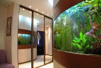 Пятиметровый аквариум. Обслуживание, оформление: Васютин О.