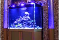 Морской аквариум и пузырьковые колонны