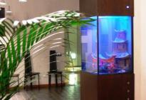 """Строгий аквариум, созданный по правилам фэн-шуй. Изготовлен на заказ. Фото, оформление студии """"Аквадизайн""""."""