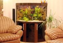 Угловой аквариум с гнутым стеклом в гостиной