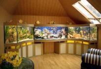 Аквариумный комплекс, состоящий из трех аквариумов